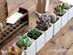 Add some organic decor to office desk or kitchen table?