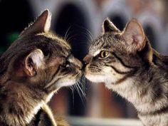 Cute Kitten Cat Photo Gallery : theBERRY