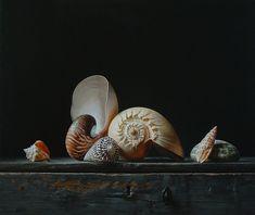Still life with shells 1 by Roman Reisinger