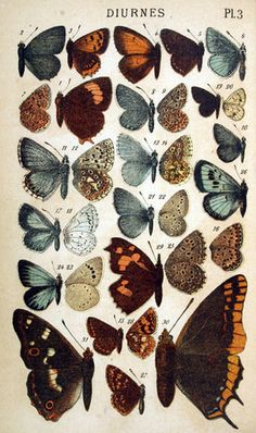 Vintage Butterfly Art #Anthropologie #PinToWin