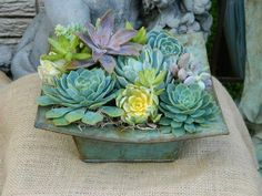 Turquoise container for succulent