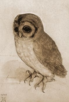 The Little Owl in Sepia by Albrecht Durer 1506