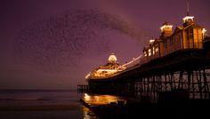 Purple skies sarah_medway_eastbourne_east_sussex_murmuration