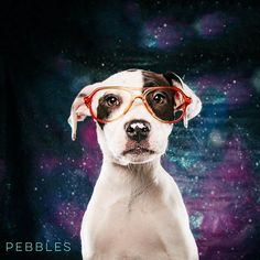 "02/23/17 - HOUSTON-My mom was a coonhound and my dad was a red nosed pit. That makes me 4 months of wiggles, confidence, love, and cuteness. Let's Party!"" Pebbles is available for adoption through Jamie's Animal Rescue. jamiesanimalrescue@yahoo.com"