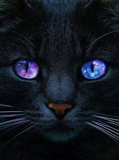 12 Reasons to Love Black Cats Cute Baby Cats, Cute Cats And Kittens, Cute Funny Animals, Cute Baby Animals, I Love Cats, Crazy Cats, Cool Cats, Kittens Cutest, Funny Animal Pictures