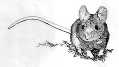 Google Image Result for http://elizparsons.com/wp-content/uploads/2011/12/field-mouse.jpg