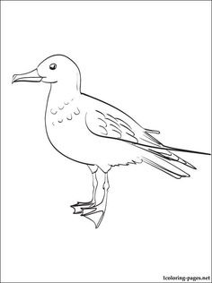 Gull Coloring Page For Kids