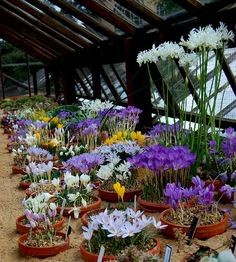 ... so that material in the peak of display can be brought though into the public area and exhibited for a few weeks in the alpine house.