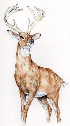 Deer Sketch, Hand Sketch, Deer Drawing, Guy Drawing, Simple Line Drawings, Cute Drawings, Aesthetic Drawing, Aesthetic Art, Escher Drawing Hands