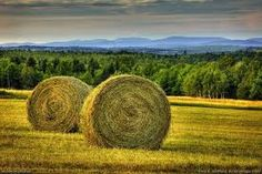 Image result for circular hay bales
