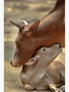 """Mom & Newborn in a Blissful Moment"" Greeting Card by jennelleimages 