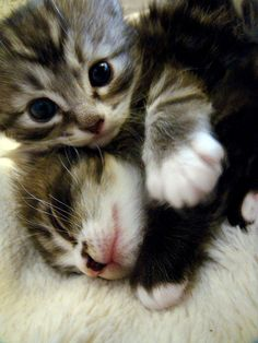 cute rescued kittens Twiggles and Rofl