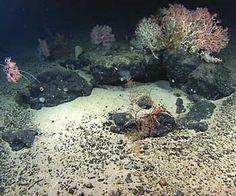 Deep Ocean Sea Life - Bing Images