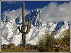 Tropical Snow by MikeJonesPhoto, via Flickr