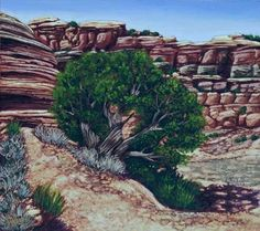 Canyon Juniper