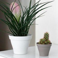 Lilo ce pot a l 39 aspect mat existe en rond et carr for Plante pour dormir