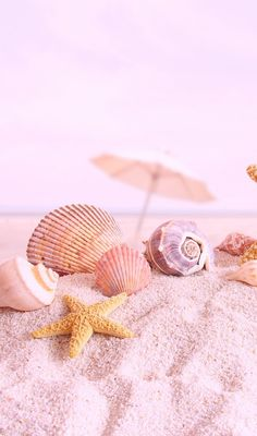 Pink sand and sea shells