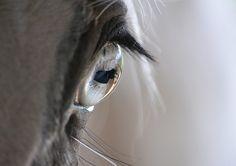 Horse Eye by mtsofan, via Flickr