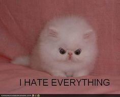 Such a cute and angry kitty. I feel like this at work most days. :P