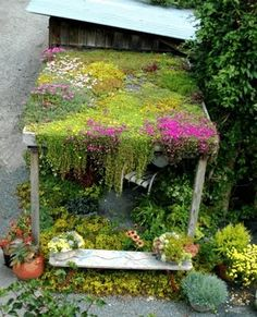 "living roof construction | Typical shed ""green"" roof. The one at the park will be made of local ..."