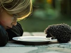 Imagenes para Fondos: Animales