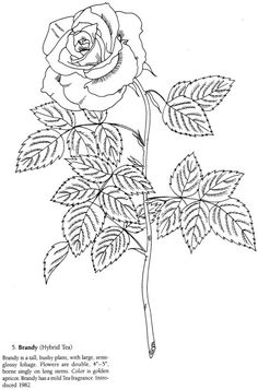 Rose coloring page from Favorite Roses Coloring Book by Dover Publications