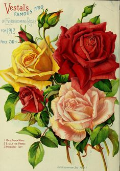 Vestal's roses, plants, bulbs, seeds, etc. Vintage Diy, Rose Vintage, Vintage Labels, Vintage Flowers, Vintage Postcards, Vintage Images, Decoupage Vintage, Flower Catalogs, Garden Catalogs
