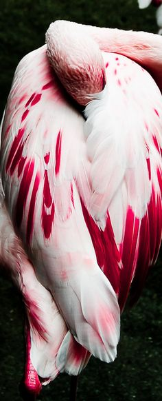 | ROAR VIBE LONDON | Pink and white striking bird feathers. Pin via…