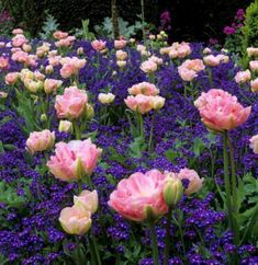 Gardening Flowers My Favorite Plant Combinations 80 - Awesome Favourite Plant Combinations Tulips Garden, Planting Flowers, Flower Gardening, Fruit Garden, Beautiful Gardens, Beautiful Flowers, Beautiful Pictures, Flower Garden Design, Spring Bulbs