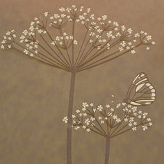 drawing cow parsley - Google Search