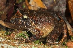 Number of Species New to Bolivia's Madidi Park Expands to 60 - National Geographic