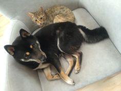 Rady nejen do zahrady Cats, Animals, Gatos, Animales, Animaux, Cat, Animal, Kitty, Cats And Kittens