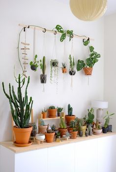 Product designer Maria Bergstrom's own DIY plant wall and cactus display for a small bedroom.