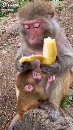 Cute Little Animals, Cute Funny Animals, Cute Dogs, Tiny Baby Animals, Funny Monkeys, Funny Animal Memes, Funny Animal Pictures, Funny Duck, Baby Animals Pictures