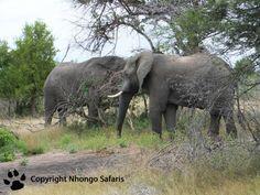 Elephants Kruger National Park, National Parks, View Photos, Elephants, Safari, Animals, Animales, Animaux, Animal