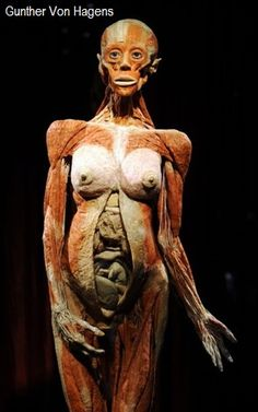 Controversy in China over Gunther von Hagens' human cadaver exhibitions, questions about his Dalian factory, and Chinese prisons being the source of his bodies. Vanitas, Gunther Von Hagens, Nicola Tesla, Creepy History, 8 Month Old Baby, Medical History, Chinese Culture, Human Anatomy, Folklore
