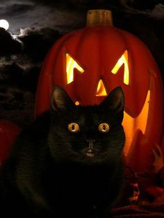 Halloween When All Lucky Black Cats Are Safe And Warm Inside!