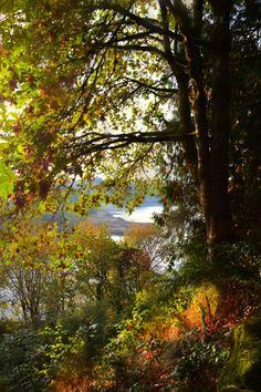 "seagirl49: ""Hidden Autumn © Susan Kramer 2015 All Rights Reserved Willamette River, Portland, Oregon US PDX """