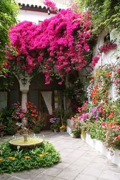 Bougainvillea tree in Spanish style entry Beautiful Flowers Garden, Beautiful Gardens, Trees Beautiful, Flowers Nature, Beautiful Gorgeous, Beautiful Things, Dream Garden, Home And Garden, The Secret Garden