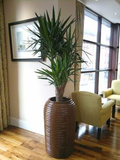 7 ways to refresh with indoor plants and some cool for Yucca wohnzimmer