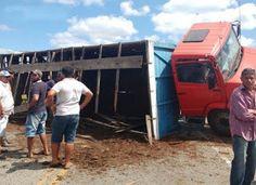 São Sebastião do Umbuzeiro a Vista: Caminhão carregado com bois tomba em rodovia no Ca...