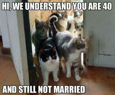 20 Hilarious Cat Lady Memes You Would Totally Love - World's largest collection of cat memes and other animals Funny Pictures With Captions, Funny Animal Pictures, Funny Animals, Cute Animals, Funny Pics, Funny Captions, Funniest Animals, Animal Funnies, Animal Humour