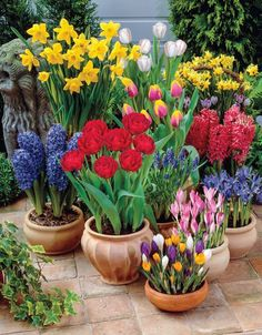 30 Admirable Spring Flowers Garden Landscaping Ideas - Ah Spring, what a magical time of year. The cold of winter is starting to leave and the air is filled with that special feeling of renewal. Spring is . Daffodils Planting, Tulips Garden, Garden Bulbs, Planting Bulbs, Garden Pots, Garden Shade, Daffodil Bulbs, Bulb Flowers, Flower Planters