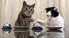 Stop What You're Doing And Watch These Cats Ringing A Bell For Food