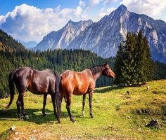 HIGH COUNTRY HORSES COMPUTER MOUSE PAD  9 x 7 #UnbrandedGeneric