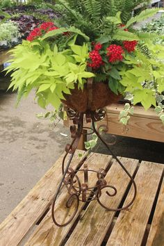 #container; designed at The Barn Nursery, Chattanooga! 081116    sweet potato vine, penta, and ferns