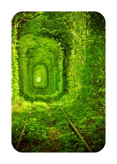 This stunning tree tunnel is to be found in Ukraine. It is a three kilometer section of a private railway.    The tunnel is called The Tunnel of Love by locals and is one of the most romantic places in the world. In spring the tunnel grows completely green, and couples come here to make a wish. It is said that if it's true love their wish will come true.    Feeling the urge?  Hop on a plane to Rivne, and catch a train to Klevan.