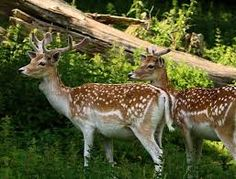 Wildlife sign surveys ideal model than direct sightings Wildlife sign surveys can be an ideal and cheaper model too to monitor animal distributions compared to direct detection methods, researchers said.