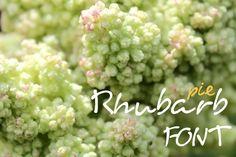 Rhubarb pie font by Ana Babii on @creativemarket