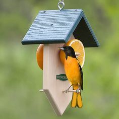 Bird House Kits Make Great Bird Houses Wooden Bird Feeders, Bird House Feeder, Diy Bird Feeder, Bird Feeder Plans, Oriole Bird Feeders, Bee Feeder, Bird Seed Feeders, Bird House Plans, Bird House Kits